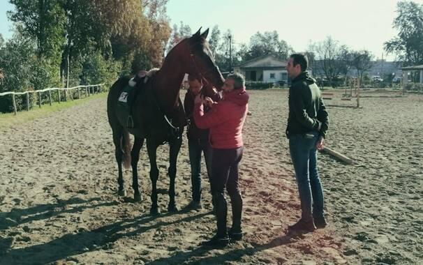 Oristano - visite veterinarie sartiglia