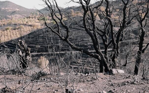 terreno-colpito-incendio