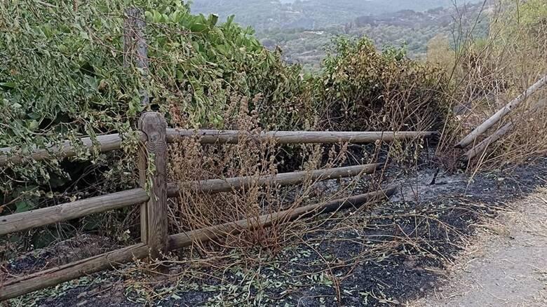 Cuglieri - campagne - recinti danneggiati incendio - Foto Maria Giovanna Campus