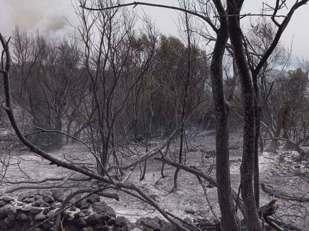 L'incendio ha devastato le campagne di Sennariolo