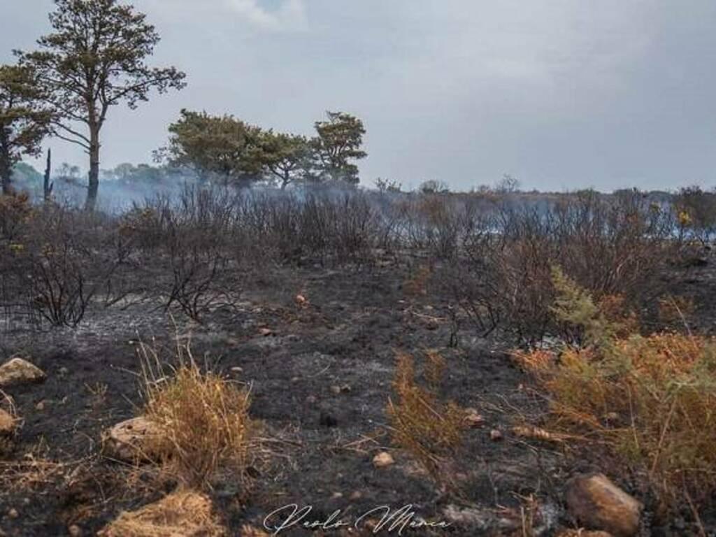 L'agro di Usellus dopo l'incendio - Foto scattata dal consigliere comunale Paolo Manca