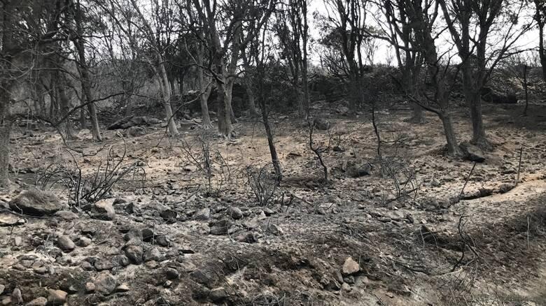 Santu Lussurgiu - la devastazione del fuoco - Foto Giovanni Matta