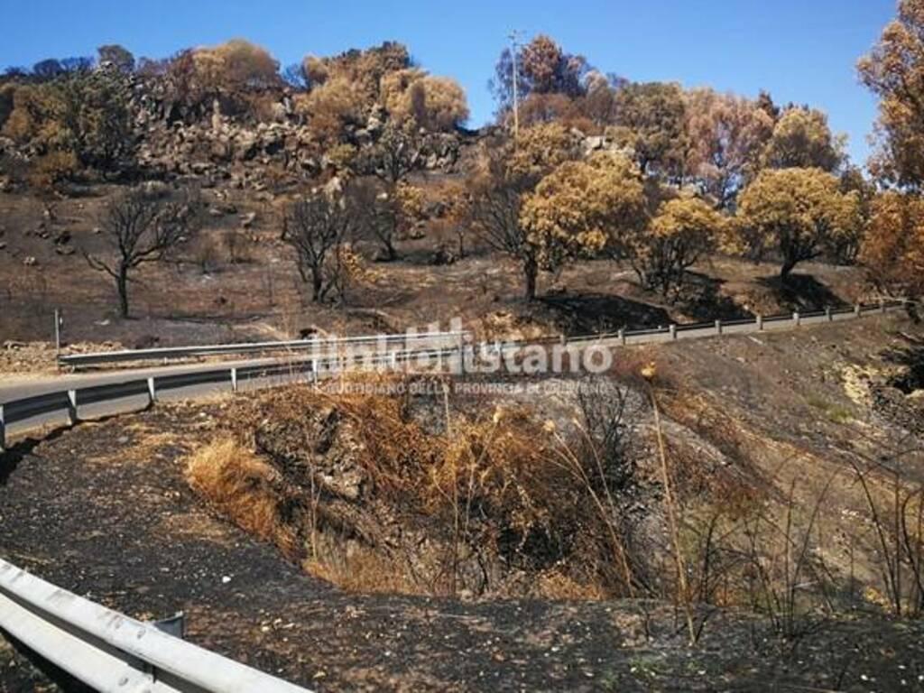 Santu Lussurgiu - post incendio - campagna bruciata