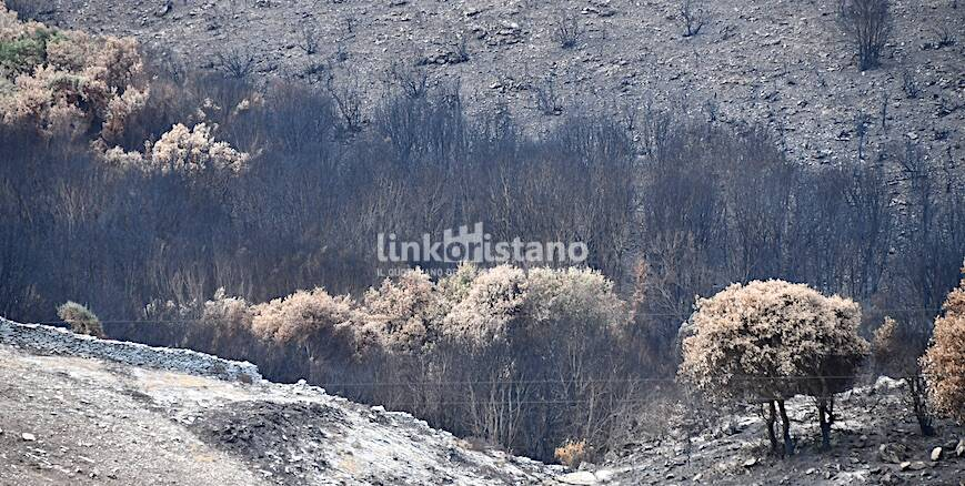 Incendio Cuglieri Montiferru