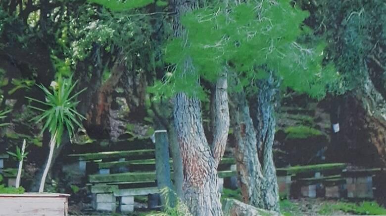 Ollastra - giornata ecologica boschetto