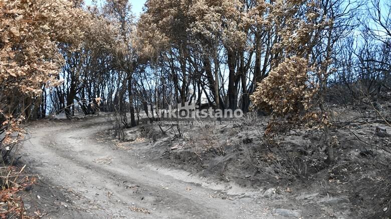 Santu Lussurgiu - incendio - strada di cenere
